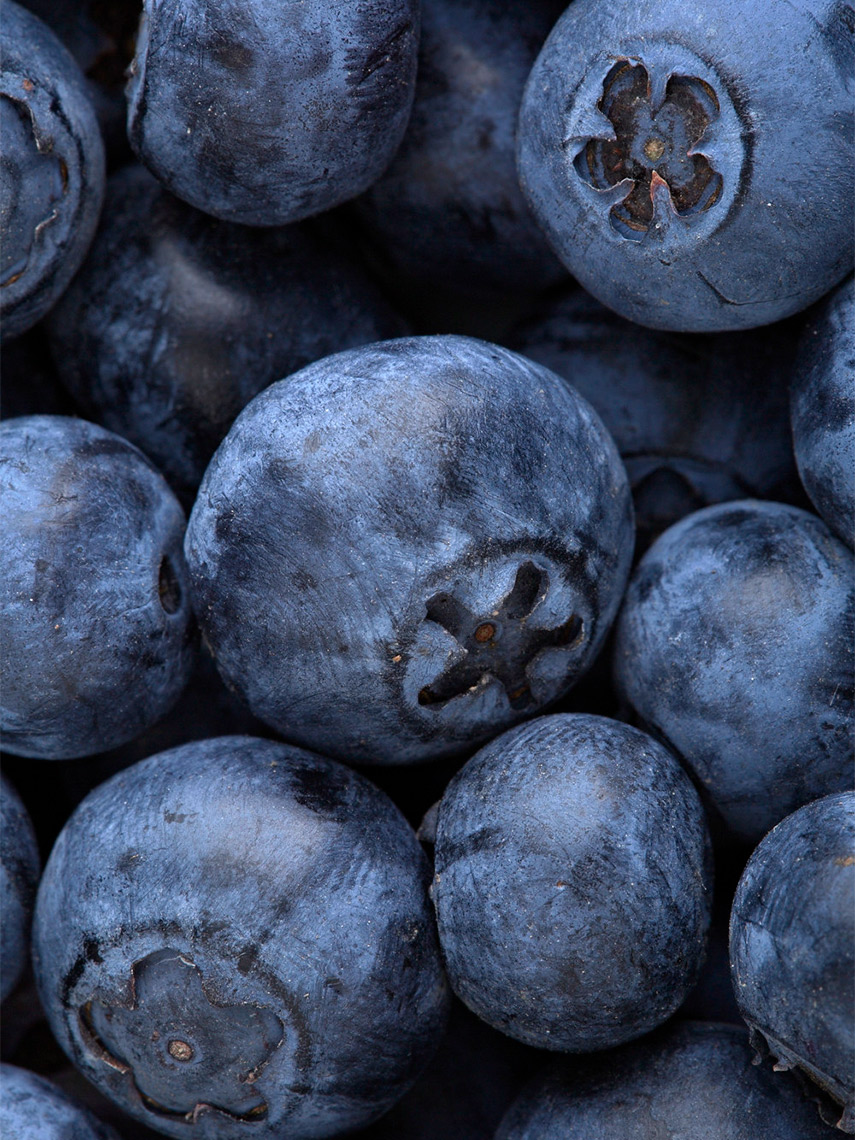23127-140215_PK_FN_S14_blueberries_018
